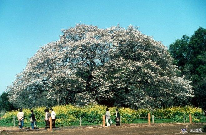 La natura a Inzai