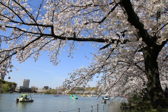 Il parco di Ueno