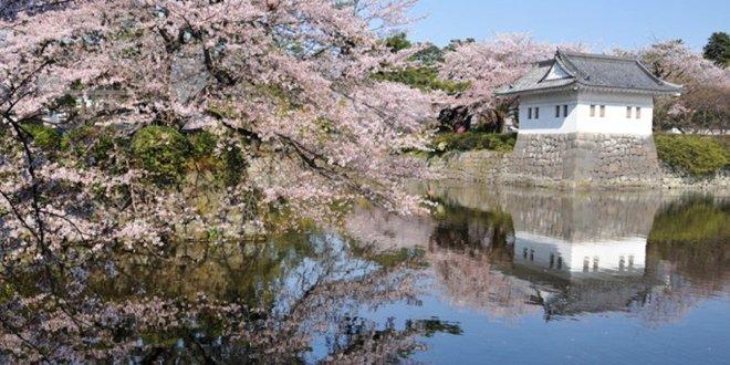 Il Castello di Odawara in primavera