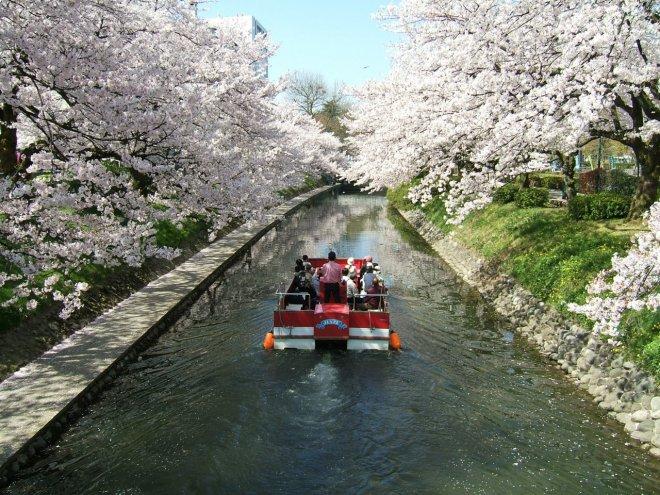 Il fiume Matsukawa in primavera